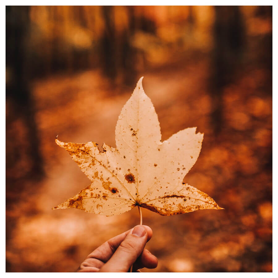 Lightroom preset filters from Pixgrade fall leaves in the forest for travellers after