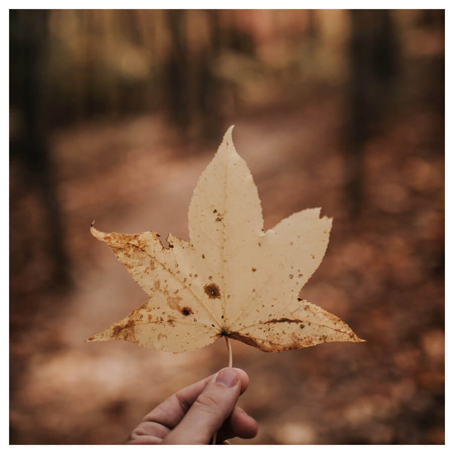 Lightroom preset filters from Pixgrade fall leaves in the forest for travellers before
