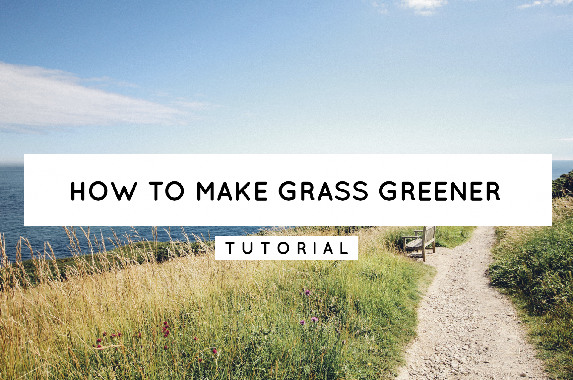 Header of blog how to make grass greener